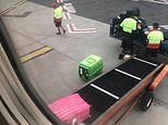 Dog left sitting on the tarmac in scorching heat before being boarded onto a Virgin Australia plane