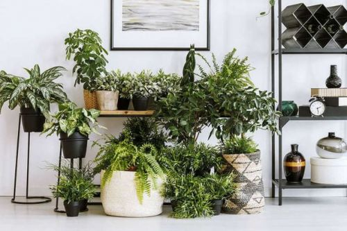 Best house plants that help to purify the air