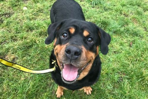 West Lothian rehoming centre calls for a home for rottweiler
