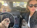 Kate Beckinsale shares comical clip of cat Clive 'flying a plane' as she travels on a private jet