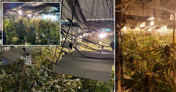 Cannabis crop worth £1m discovered in former Coventry nightclub