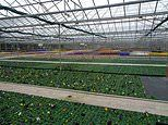 Millions of seasonal plants worth total of £200m will be destroyed due to coronavirus