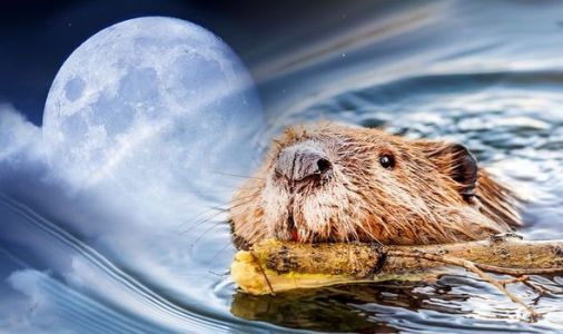 Full Moon 2020: When is the next Full Moon? Why is it called the Beaver Moon?