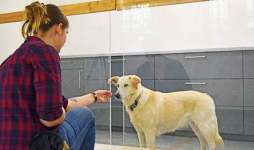 Dogs can read human minds and 'recognise their intentions,' new study claims