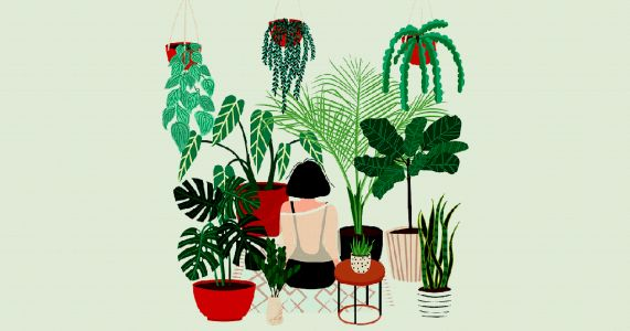 Does talking to your house plants actually help them grow?