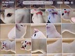 Chinese pet owner finds dozens of 'cat selfies' after the feline was playing with her tablet