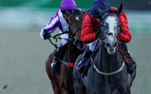 Marlborough racing tips and best bets for Monday, January 25