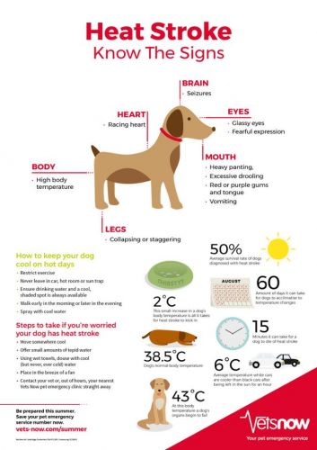 """""""Dogs In Dubai"""" Are Reminding Pet Parents Of The UAE's Intense Summer Heat & Its Effects On Doggos"""