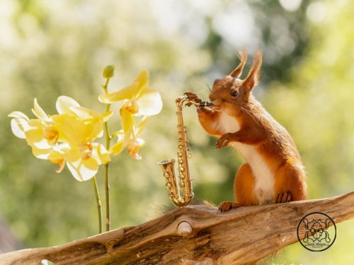 13 unbelievable photographs of squirrels playing tiny musical instruments