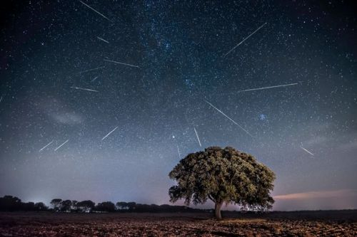 Perseid Meteor Shower peaks this week - best time to see shooting stars from UK