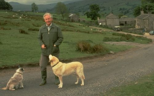 Novels of James Herriot lead public to think they can pay for vets with cake