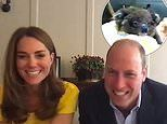 Prince William and Kate Middleton gush over 'sweet' Grace the koala in a video call with Australia