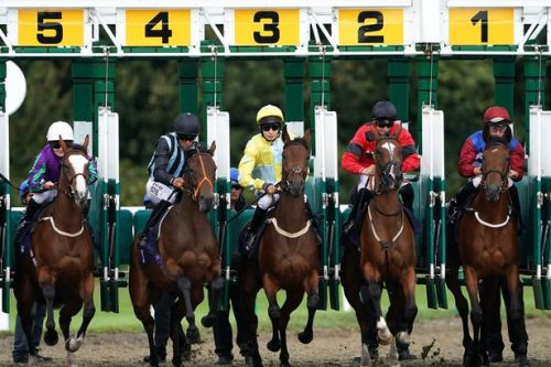 Horse racing given government go-ahead to resume on June 1
