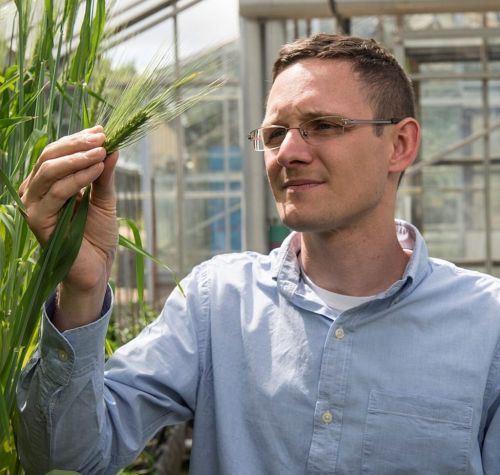 The grass has never been greener for engineering plant immunity and resilience