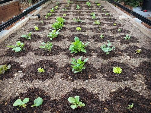 FarmBot automates tending, weeding, and watering a garden and makes it as easy as playing a video game to feed a family of 4 - here's how it works