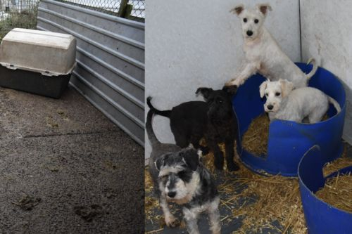 See inside vile Aberdeenshire puppy farm where helpless dogs kept in horrific conditions