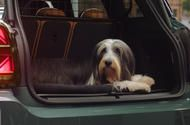 Mini partners with Dogs Trust to promote pet-friendly travel