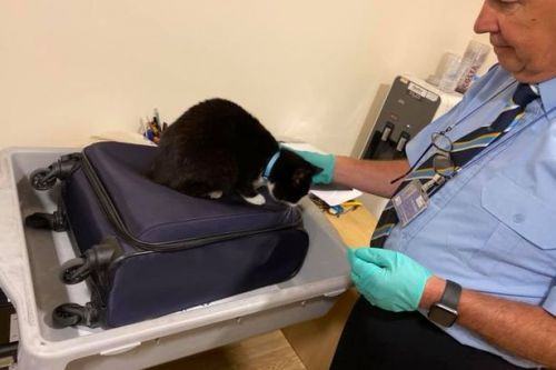 Couple stopped at airport security after pet cat sneaks into hand luggage