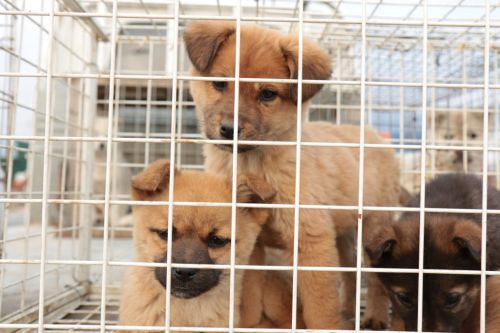 Fears of puppy smugglers exploiting demand as prices for dog breeds rocket
