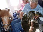 The VERY strange emotional support pets people have brought on the plane