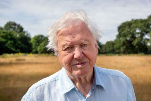 Sir David Attenborough says to act on climate change now or it will be too late ahead of COP26