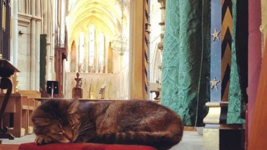 Cathedral livestreams memorial service for stray cat