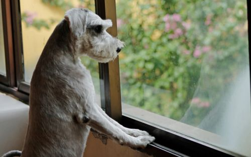 Pet owners urged to support lonely animals during return-to-work transition after lockdown