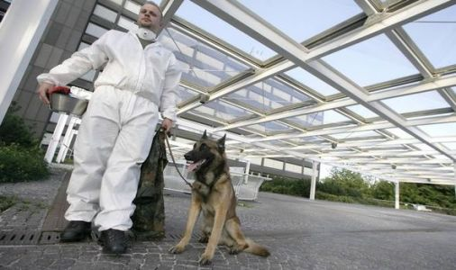 Hero dogs in training to sniff out coronavirus - even in those showing NO symptoms