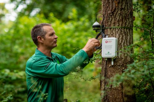 Internet of Trees: Vodafone uses NB-IoT to aid climate change research