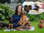 The luxurious boutique hotel - for sausage dogs!