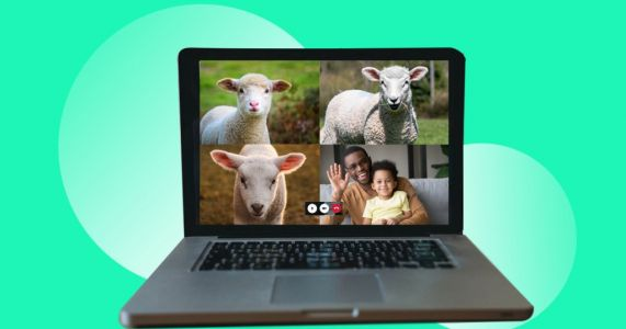 You can now have a private Zoom call with lambs and goat kids, thanks to Stepney City Farm