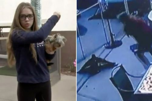Girl bravely tries to fight off hawk as it swoops down and attacks her dog