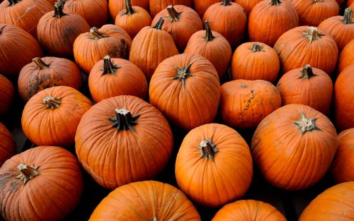 Halloween 2021: trick-or-treating, fancy dress costumes and why we carve pumpkins on October 31