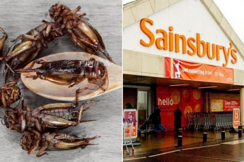 Sainsbury's to sell roasted CRICKETS in first for UK supermarket