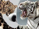 Perou spent hours with nature's biggest felines for a new series of eye-catching portraits