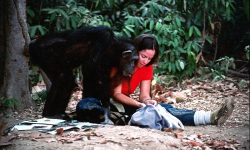 Was Lucy the Human Chimp killed by poachers? All we know