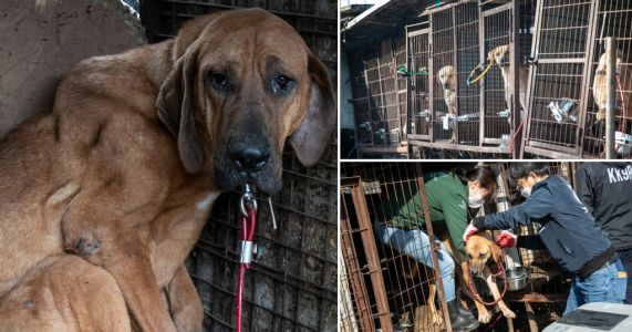 50 dogs locked in cages without water rescued from meat farm in South Korea