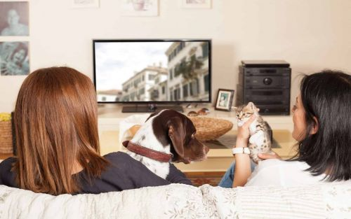 Brits spend third of 2020 watching TV & streaming services