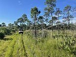 Brian Laundrie search returns to 'gator and snake-infested' Florida swamp land