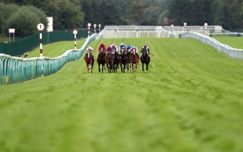 Marlborough racing tips and best bets for Saturday, August 8