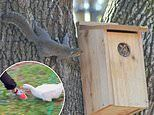 Amateur photographers share wildlife snaps capturing animals in hilarious predicaments