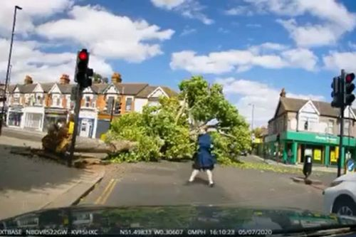 Terrifying moment a huge falling tree narrowly misses three walkers on busy road