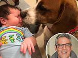 Andy Cohen shares cute photo of newborn son Benjamin bonding with his dog Wacha
