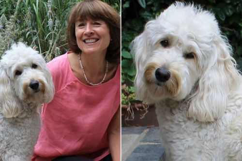 Grieving writer tells how puppy saved her from a breakdown after losing her mum