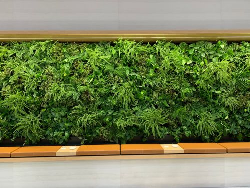 Millennials love plants so much they're convincing tech companies to replace office artwork with 'living walls'