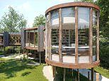 Seven acres of woodland with permission to build a luxury treehouse goes on sale for £1m