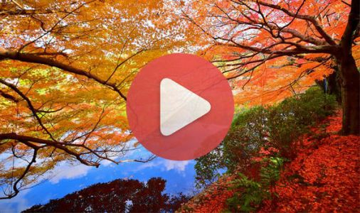 Autumn Equinox LIVE stream: How to watch the September Equinox live ONLINE
