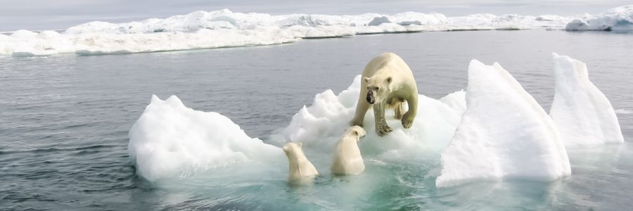 International poll: most expect to feel impact of climate change, many think it will make us extinct