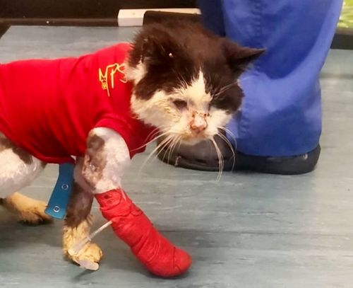 Crowdfunding has raised £6k to treat stray cat with feline HIV nicknamed 'Smelly Cat'
