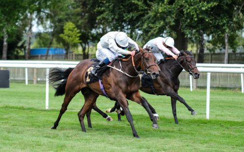 Marlborough racing tips and best bets for Saturday, August 15